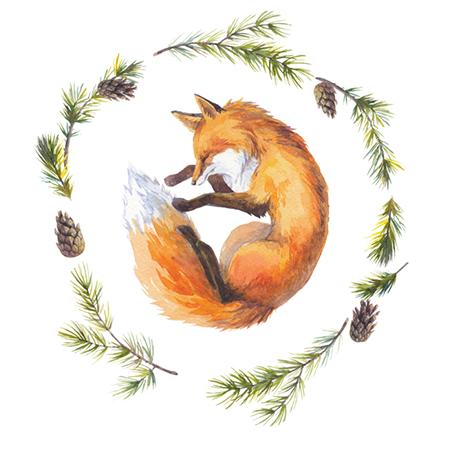 The Red Fox | orangefox